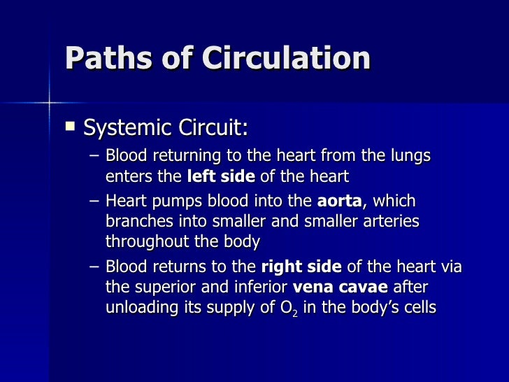 an introduction to the respiratry and circulatory system Respiratory and circulatory systems the respiratory system of nearly all animals begins within the nasal cavity as an animal inhales the air travels through the.