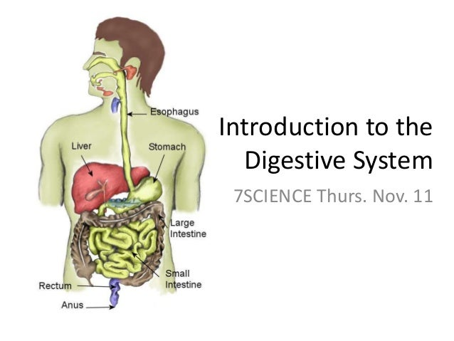 Introduction to the Digestive System 7SCIENCE Thurs. Nov. 11