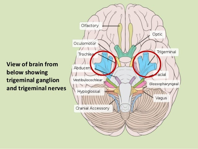Introduction to the trigeminal nerve dental surgery