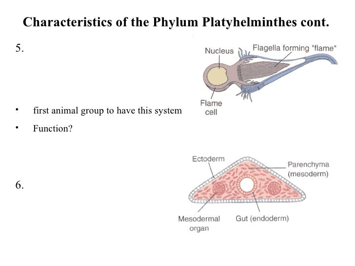 an introduction to the analysis of the nine animal phyla characteristis Major animal phyla & their characteristics for a much more accurate and complete analysis of how phylum: characteristics & classification.