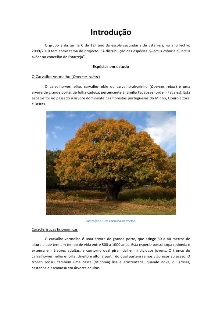 Introdução<br />O grupo 3 da turma C do 12º ano da escola secundária de Estarreja, no ano lectivo 2009/2010 tem como tema ...