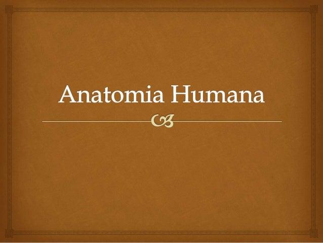   Anatomia (ana=partes, tomein=cortar) é a ciência responsável pelo estudo macroscópico do corpo humano Conceito de Anat...