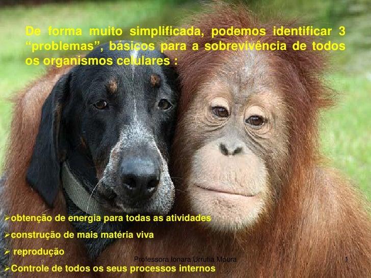 """De forma muito simplificada, podemos identificar 3     """"problemas"""", básicos para a sobrevivência de todos     os organismo..."""