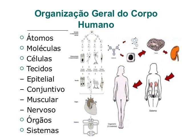 Fisiologia humana introdução