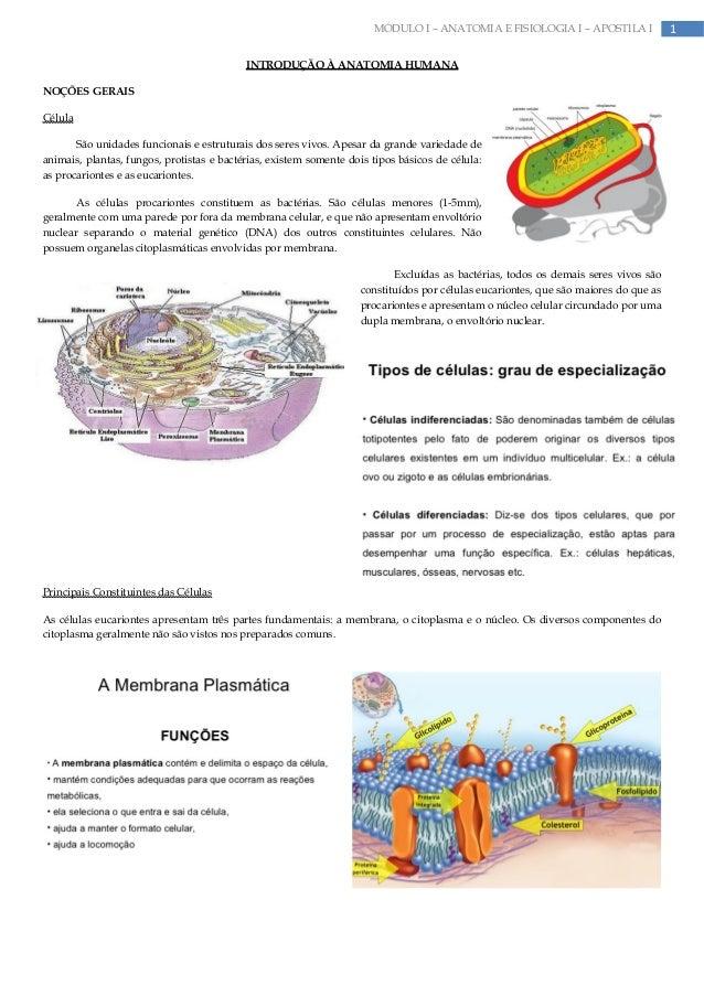 1MÓDULO I – ANATOMIA E FISIOLOGIA I – APOSTILA IINTRODUÇÃO À ANATOMIA HUMANANOÇÕES GERAISCélulaSão unidades funcionais e e...