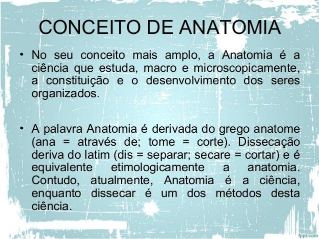 estudo da anatomia Slide 2