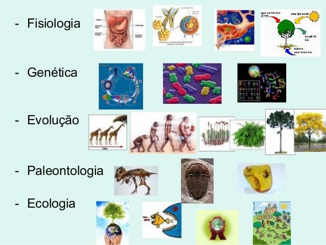 - Fisiologia- Genética- Evolução- Paleontologia- Ecologia