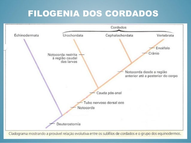 FILOGENIA DE CORDADOS EBOOK