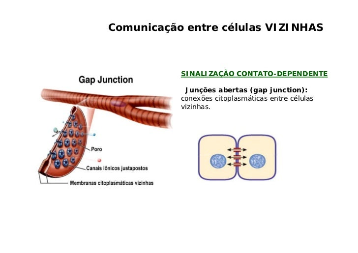 Comunicação entre células DISTANTES     Comunicação sináptica: o mediador que é d C      i   ã    i á ti        di d      ...