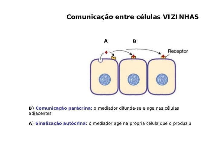 A neurotransmissão ocorre entre os neurônios e entre neurônios e células efetuadoras (células musculares ou glandulares).