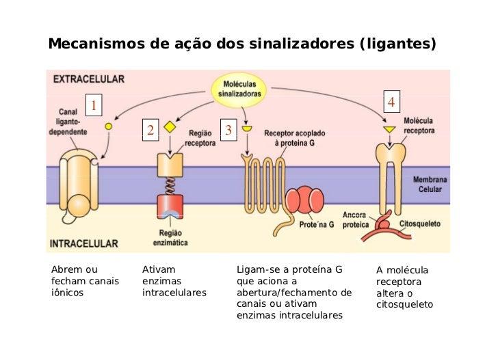 Sistema respiratório  - Troca de gases com o meio externo