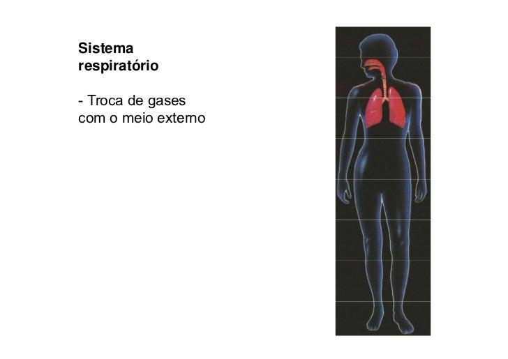Sistema reprodutivo  - Produz óvulos e espermatozóides