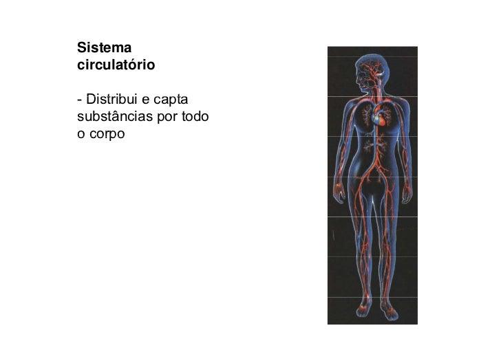 HOMEOSTASIA  Tendência T dê i permanente d organismo manter a                      t do       i       t constância do meio...
