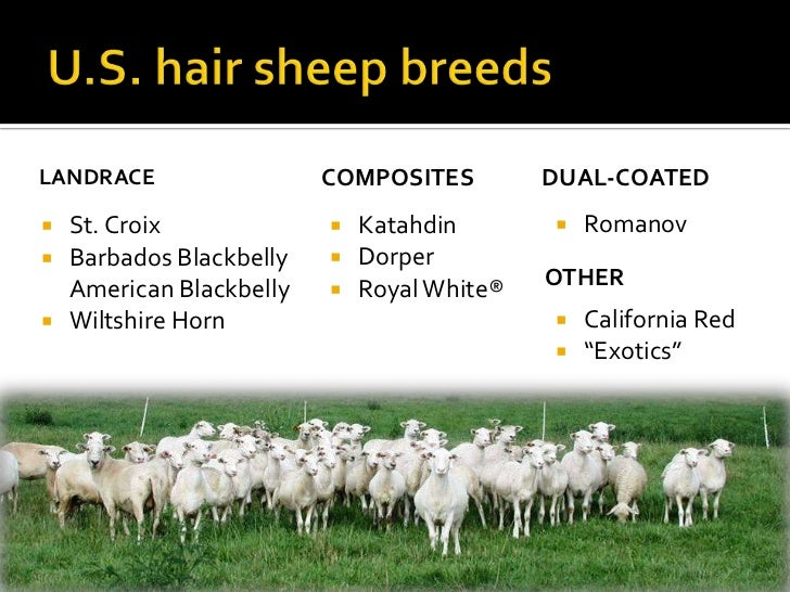 Introduction to Hair Sheep Production