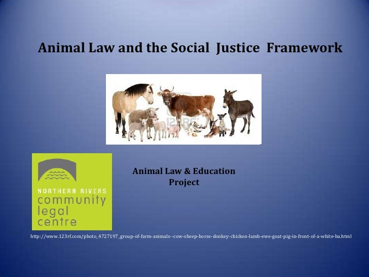 Animal Law and the Social Justice Framework                                                 ni                            ...