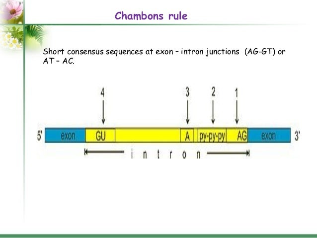 Rna structure and functions