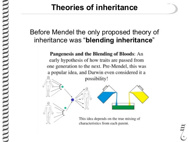 theory of inheritance vs theory of The chromosome theory of inheritance, or the idea that genes are located on  chromosomes, was proposed based on experiments by thomas.