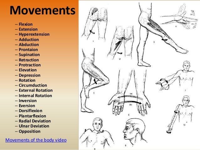 Body Movements Flexion Extension Diagram Auto Electrical Wiring