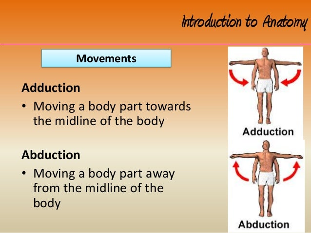 intro to anatomy Introduction to anatomy & physiology anatomy is the study of the location and makeup of body parts, while physiology is the study of the functions of the various parts and the processes involved with them.