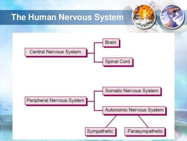autonomic nervous system pharmacology pdf