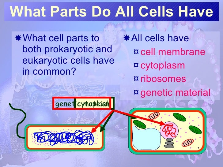 Intro To Cells