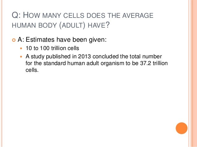how many cells are in the human body – citybeauty, Human body