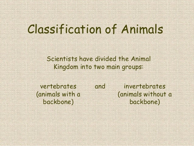 Classification of Animals Scientists have divided the Animal Kingdom into two main groups: vertebrates (animals with a bac...