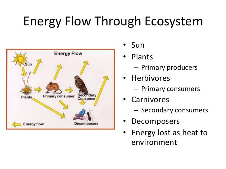 Coral Reefs Diagram Of Flow Of Energy All Kind Of Wiring Diagrams