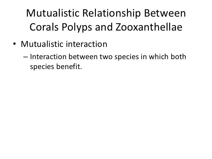 relationship between zooxanthellae and coral polyps on rocks