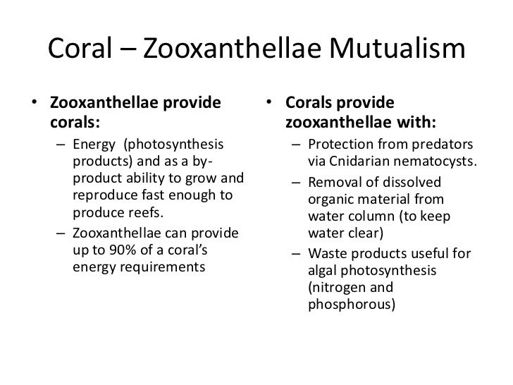 zooxanthellae and coral mutualistic relationship between algae