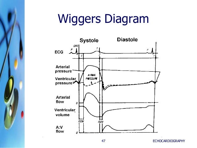 Intro to echoclass05262015 wiggers diagram echocardiography47 ccuart Images