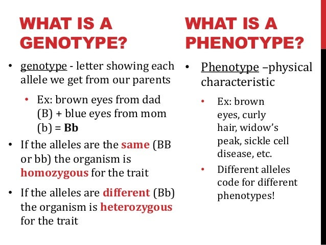 relationship between alleles and phenotype rda