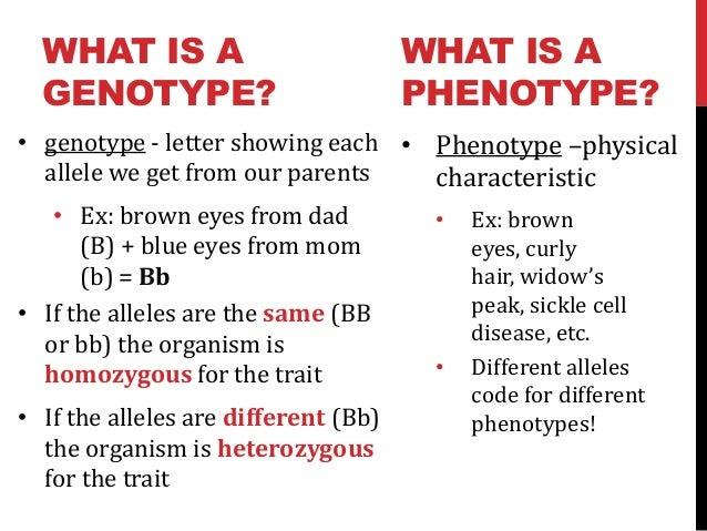 Intro To Genetics Ppt