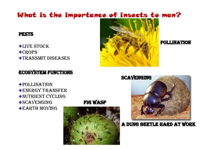 an introduction to bees and wasps from the order hymernoptera Hymenopteran - form and function: concomitant with diversity of habit in the adult hymenoptera is a diversity of form this variety prevails to such a degree that only the briefest, general description applies to the order as a whole.