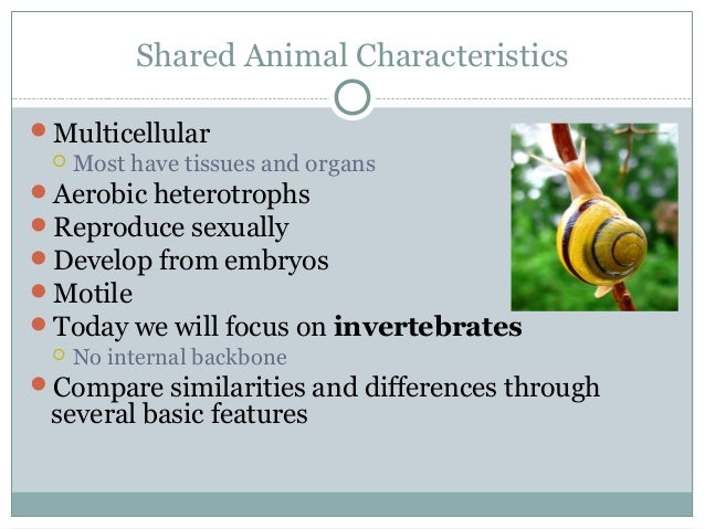 Shared Animal Characteristics Multicellular  Most have tissues and organs Aerobic heterotrophs Reproduce sexually Dev...