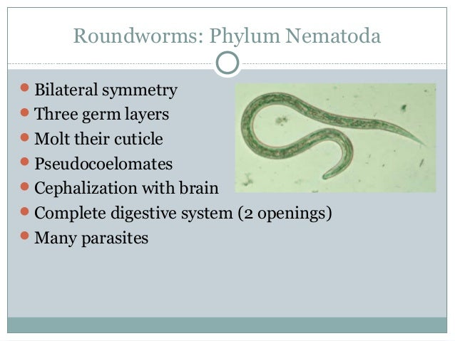 Roundworms: Phylum Nematoda Bilateral symmetry Three germ layers Molt their cuticle Pseudocoelomates Cephalization wi...