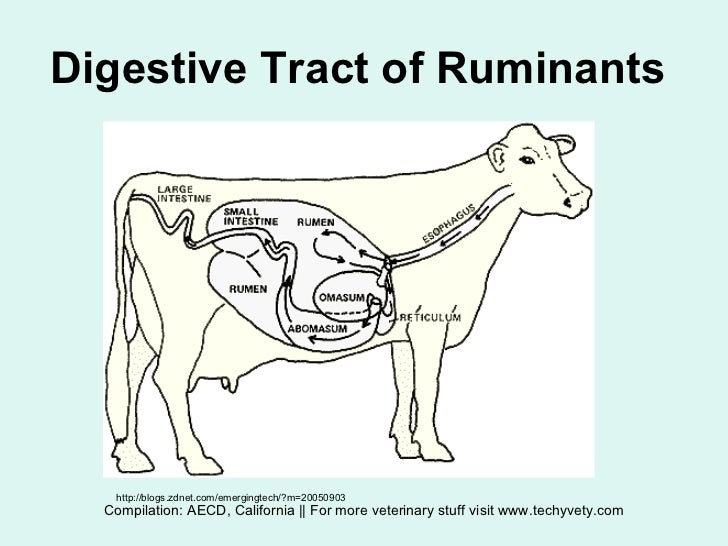 Intro to ruminant digestion ccuart Gallery
