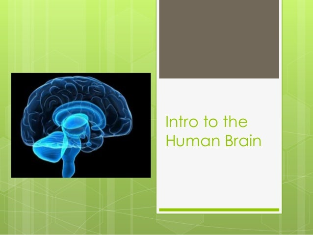 Intro to the  Human Brain