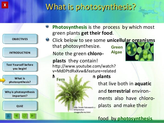 understanding the scientific method photosynthesis and Instructors name: assignment: scie207 phase 1 lab report title: understanding the scientific method: photosynthesis and cellular respiration instructions: based on the virtual experiment.