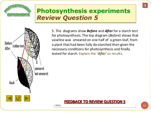 Integrated sc m1 photosynthesis experiments feedback next questionnext question 37 objectivesobjectives photosynthesis ccuart Images