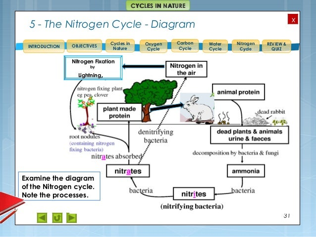 Nature cycles diagram auto electrical wiring diagram integrated science m4 cycles in nature rh slideshare net venn diagram wave cycle diagram ccuart Gallery