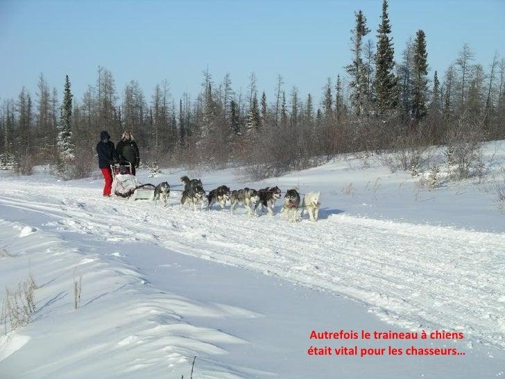 Autrefois le traineau à chiens était vital pour les chasseurs…