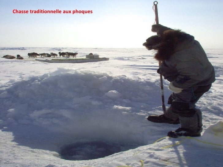 Chasse traditionnelle aux phoques