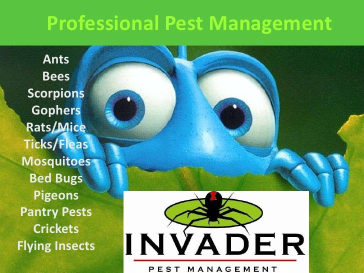 Professional Pest Management<br />Ants<br />Bees<br />Scorpions<br />Gophers<br />Rats/Mice<br />Ticks/Fleas<br />Mosquito...