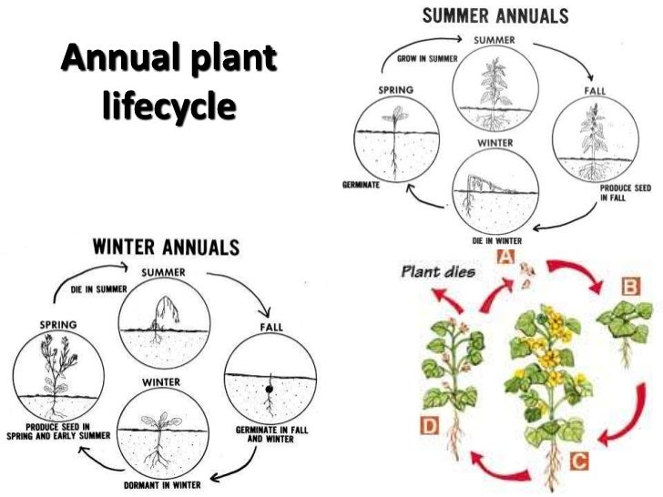 Invasive plant management milton