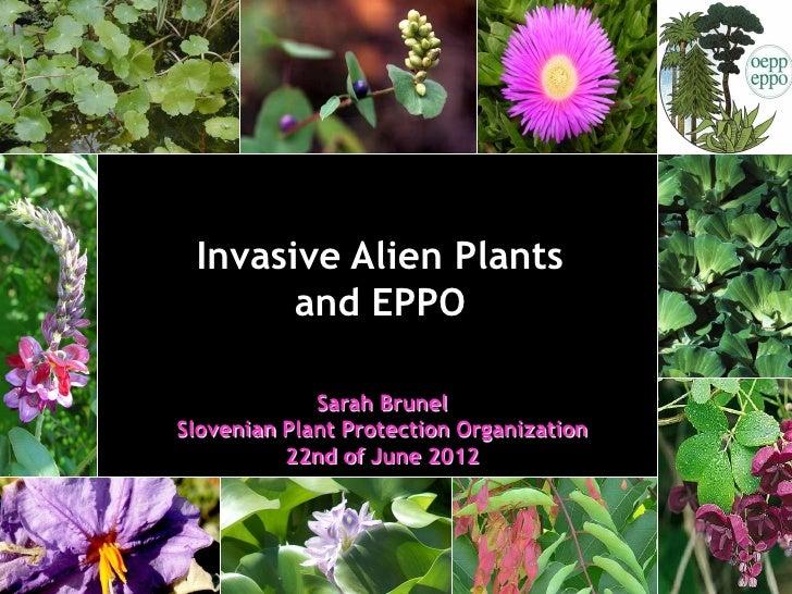 Invasive Alien Plants       and EPPO             Sarah BrunelSlovenian Plant Protection Organization          22nd of June...