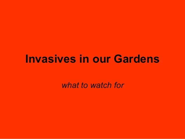 Invasives in our Gardens what to watch for