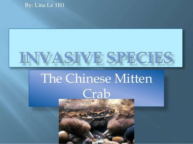 The Chinese Mitten Crab By: Lina Le 1H1