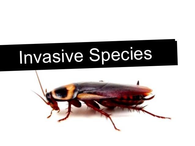Invasive SpeciesInvasive Species