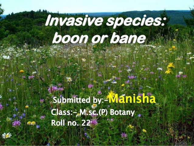 Invasive species: boon or bane Submitted by:-Manisha Class:- M.sc.(P) Botany Roll no. 22